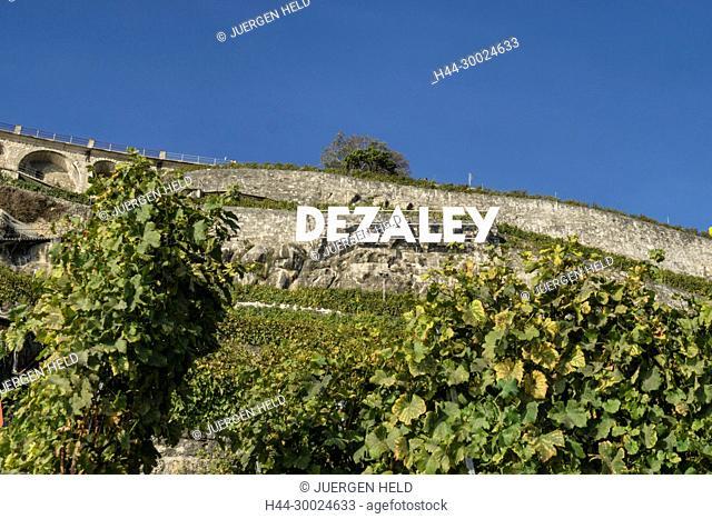 Clos des Abbayes, Dezaley, Vineyards , Lavaux region, Lake Geneva, Swiss Alps, Switzerland