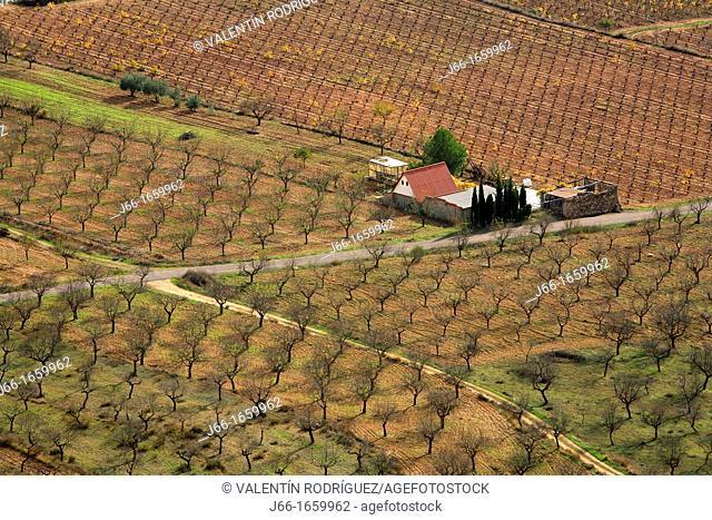 almond grove in the region Los Serranos  Valencia