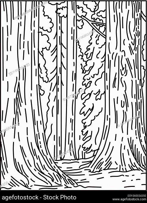 Mono line illustration of groves of giant sequoias or redwoods in Sequoia National Park in Sierra Nevada in California United States of America done in retro...