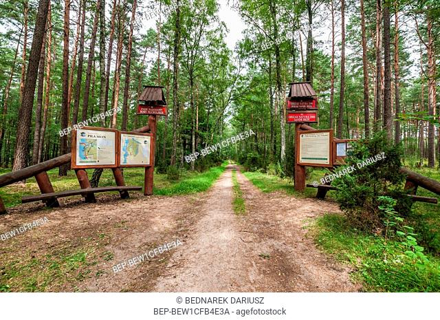 Tuchola Pinewoods, Podlaskie Voivodeship, Poland