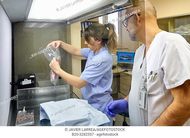 Aphaeresis, Hematology, Hospital Donostia, San Sebastian, Gipuzkoa, Basque Country, Spain