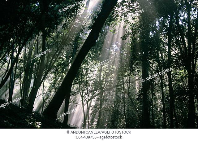 Mayan Biosphere Reserve. Yucatan Peninsula. Guatemala
