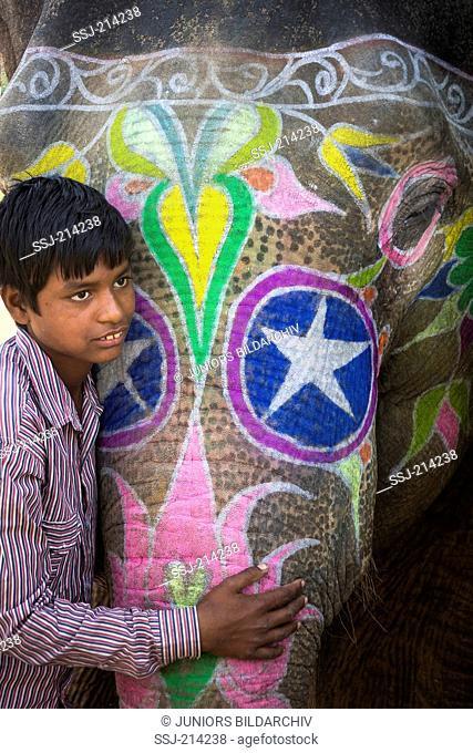 Boy fondling a decorated Asian Elephant (Elephas maximus indicus). Jaipur, Rajasthan, India