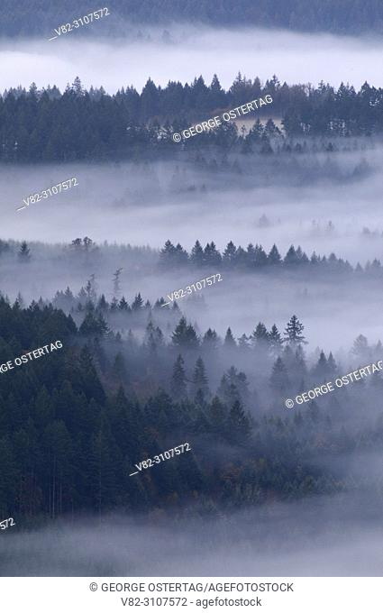 Willamette Valley view with fog, Bald Peak State Park, Oregon