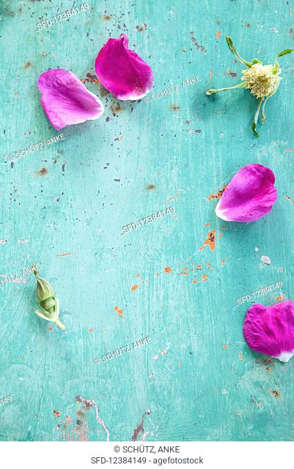 Wild rose blossoms and buds on a turquoise surface