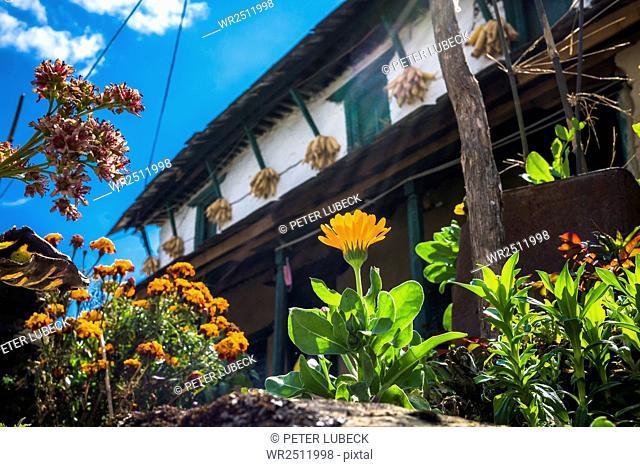 Flowering plants growing against residential building in village