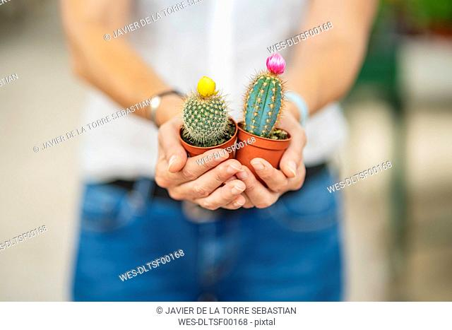 Woman's hands holding cacti in plant nursery
