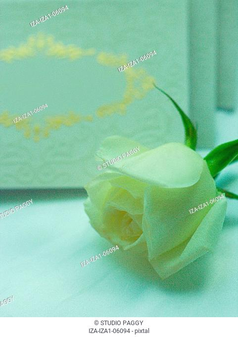 Close-up of roses with greeting cards