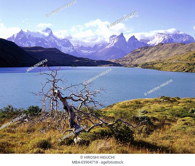 Chile, Patagonia, Torres Del Paine national-park, brine Pehoe shores tree bald South America, Latin America, destination, sight, nature, landscape