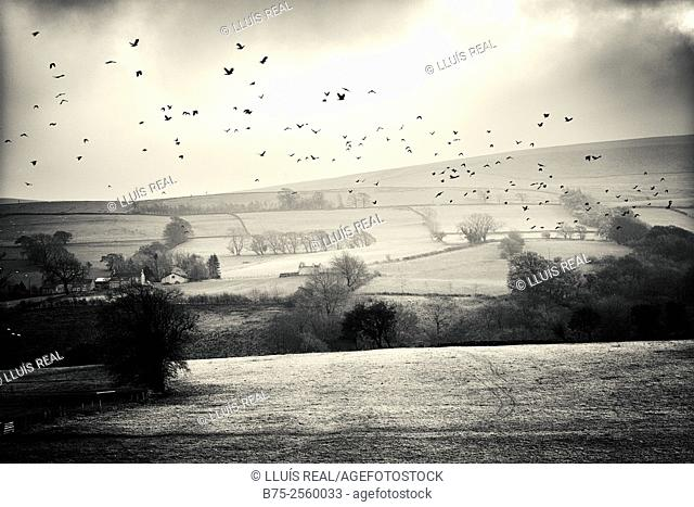 Rural landscape with many birds flying in the foreground in Yorkshire, North Yorkshire, England, UK