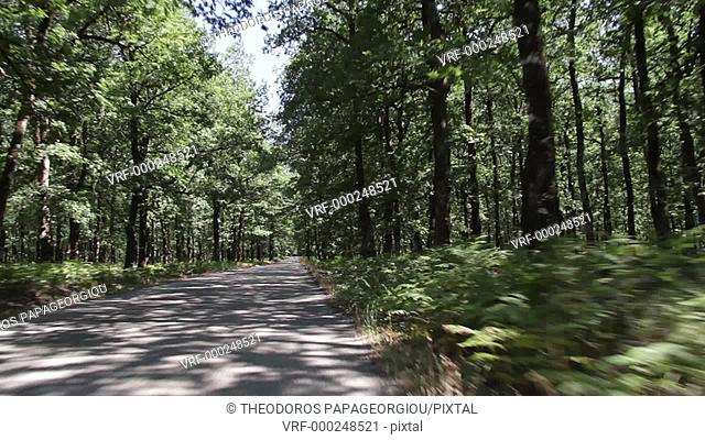 The road through Foloi oak forest, named by Hercules in memory of his deceased friend, centaur Folos. Eleia, Peloponnese, Greece