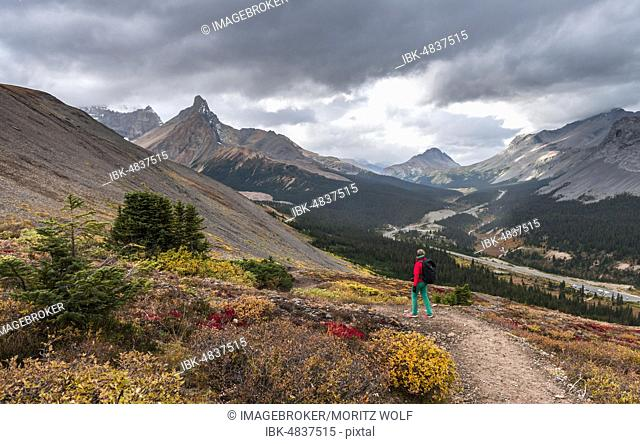 View to Mount Athabasca and Hilda Peak in autumn, hiker on the hiking trail to Parker Ridge, Jasper National Park National Park, Canadian Rocky Mountains