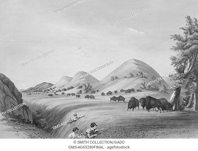A painting depicting a group of hunters, in a ravine, waiting to fire upon the herd of buffalo, other buffalo in the background can be seen walking, grazing