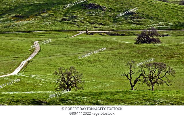 A rural road in the Northern California foothills