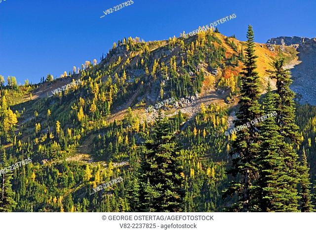 Slope above Lake Ann, Okanogan National Forest, Washington