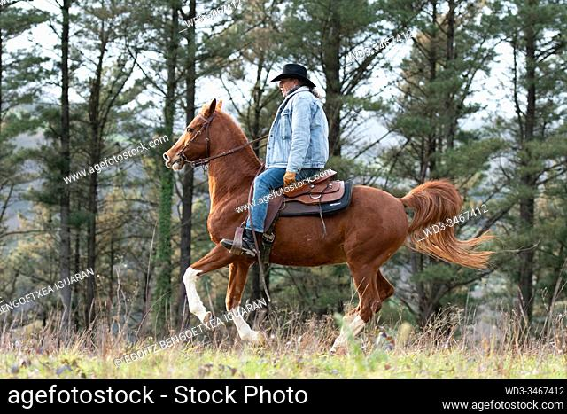 A veteran cowboy riding his arabian horse in the forest