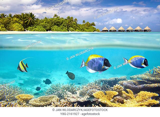 Half underwater view with fishes, Maldives, Ari Atol, Indian Ocean