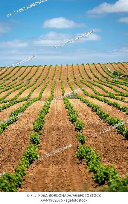 Vineyards of Cariñena wine region in spring. Saragossa, Aragon, Spain