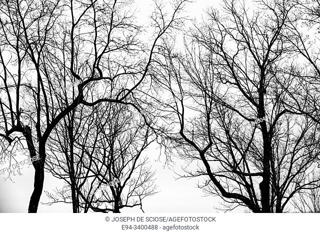 Silhouette of tree branches in the winter