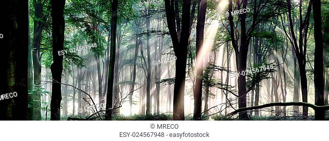 Deep forest landscape with misty morning sunlight