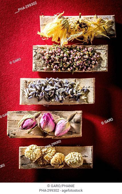 Medicinal herbs, assortment of dried herbs