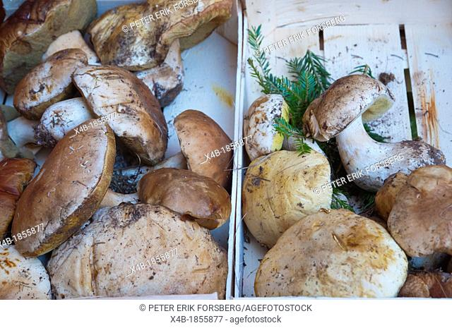 Mushrooms in Autumn for sale market at Piazza Prampolini square Reggio Emilia city Emilia-Romagna region northern Italy Europe