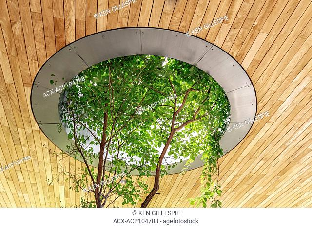 Tree growing through a roof skylight at the Qualico Family Centre, Assiniboine Park, Winnipeg, Manitoba, Canada