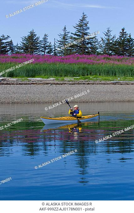 Sea kayaker paddles along the shoreline near Juneau with Fireweed field blooming in the background, Southeast Alaska, Summer