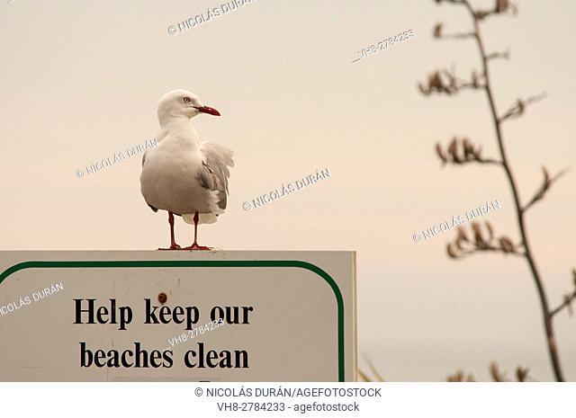 Keep our beaches clean. Kaikoura. Canterbury Region. New Zealand
