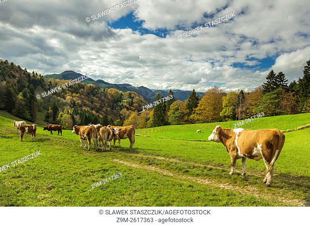 Autumn afternoon in Thal Natur Park, canton Basel-Landschaft, Switzerland. Jura Mountains