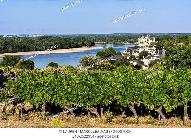 Vineyard and Castle of Montsoreau along the Loire and Vienne Rivers. Montsoreau (Labeled The Most Beautiful Villages of France), Maine-et-Loire