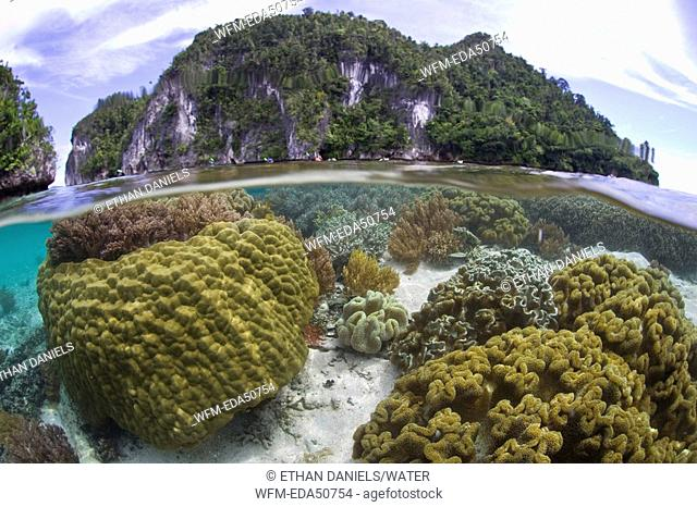 Biodiversity in shallow Coral Reef, Misool, Raja Ampat, West Papua, Indonesia
