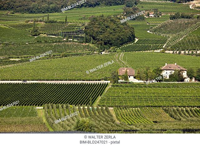 Aerial view of wine country