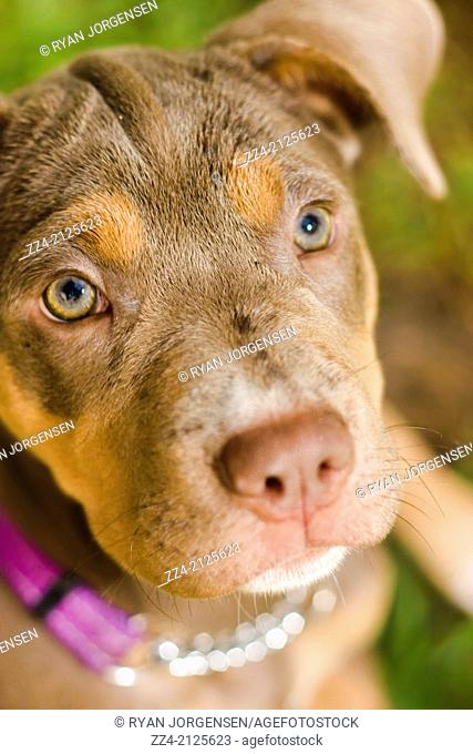 Close picture on the face of an adorable puppy dog sitting on green grass. Dog obedience training