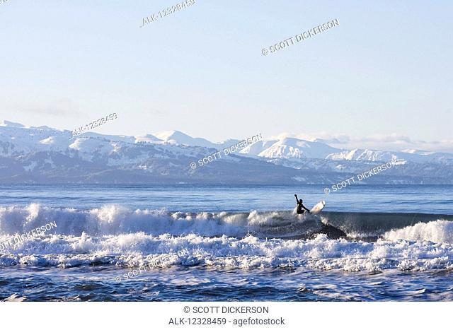Man surfing in Kachemak Bay, South-central Alaska; Homer Spit, Alaska, United States of America