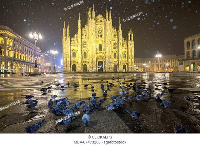 Pigeons in Piazza Duomo during a night snowfall, Milan, Lombardy, Northern Italy, Italy