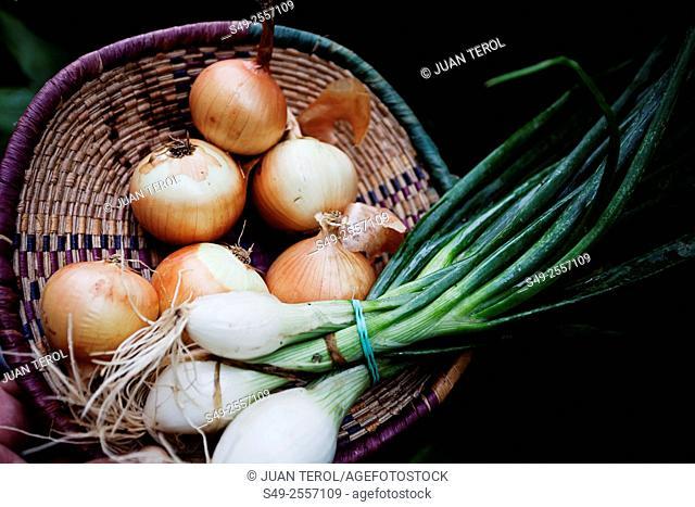 Onions on a basket