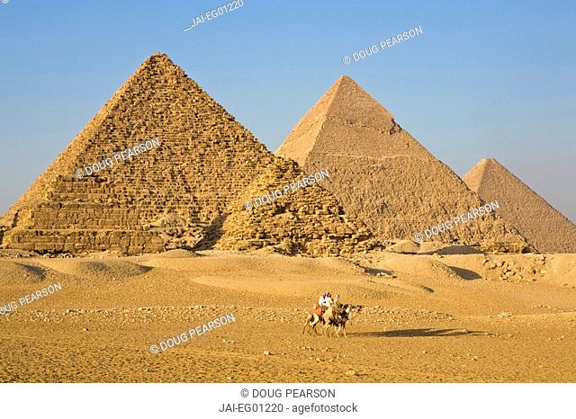Camels at the Pyramids, Giza, Cairo, Egypt