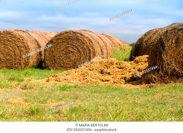 agricultural scene with alfalfa rolls in the argentinian countryside