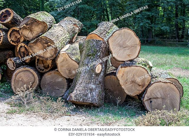 Cut tree trunks in pile in a forest