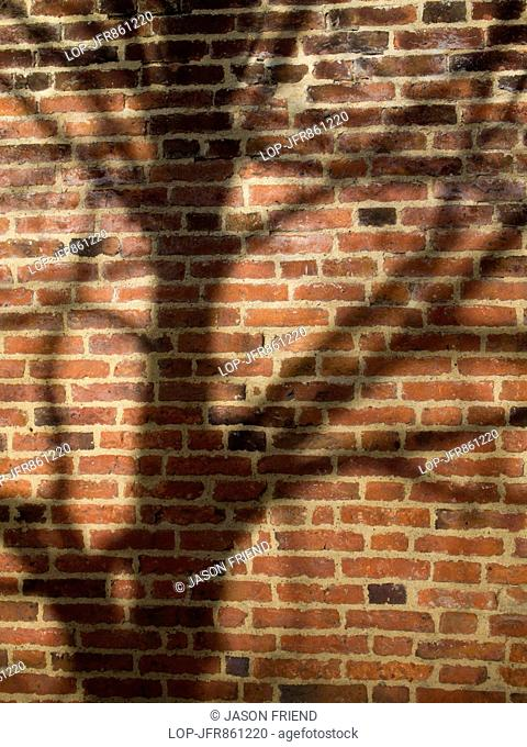 Shadow of a tree on the bricks of the walled garden