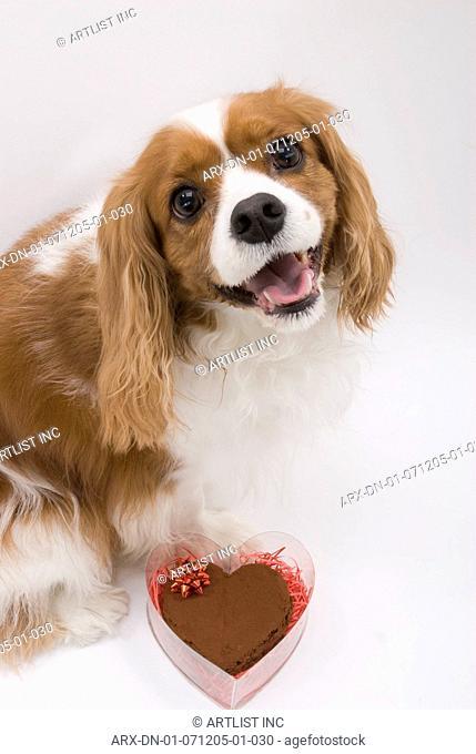 A dog ssitting by a chocolate cake