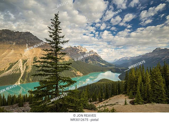 Wide view of Peyto Lake, Banff National Park, UNESCO World Heritage Site, Alberta, Rocky Mountains, Canada, North America