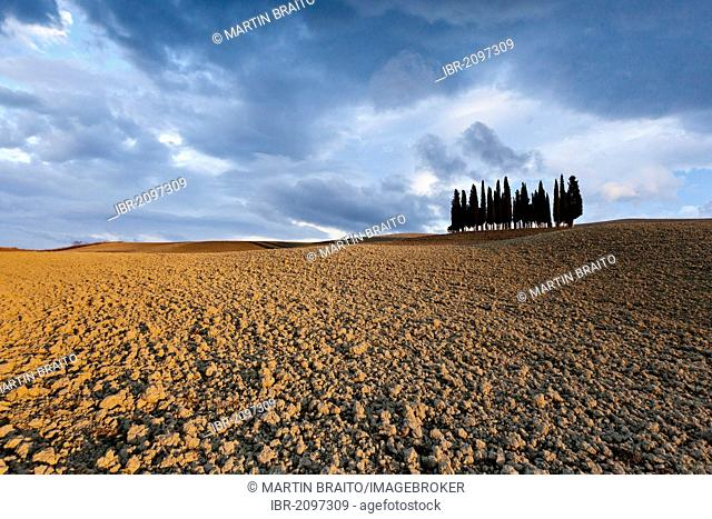 Fields near Montepulciano, view of the famous cypress grove, also known as Il Cimitero dei cani, Italian for Cemetery of Dogs, in autumn, Tuscany, Italy, Europe