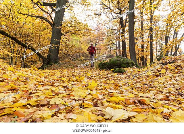 Germany, Rhineland Palatinate, hiker strolling through autumnal Palatinate Forest