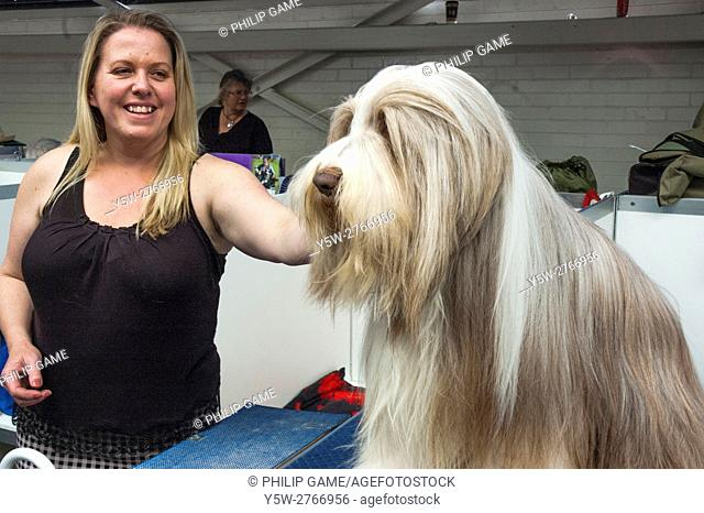 Bearded collie dog with its proud owner at the Royal Melbourne Show, Australia