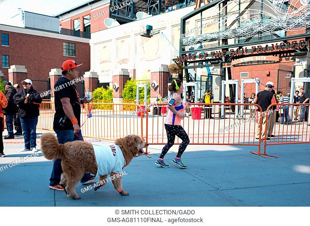 A man walks his dog, which wears a jersey for baseball player Madison Bumgarner, towards O'Doul Gate before the Dog Days of Summer promotional baseball game