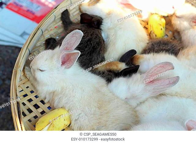 rabbits lots of cute for sale