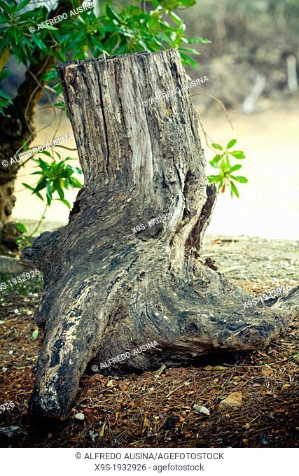 Dry trunk