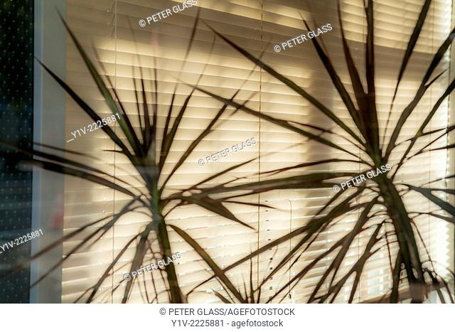 Plants in front of window blinds